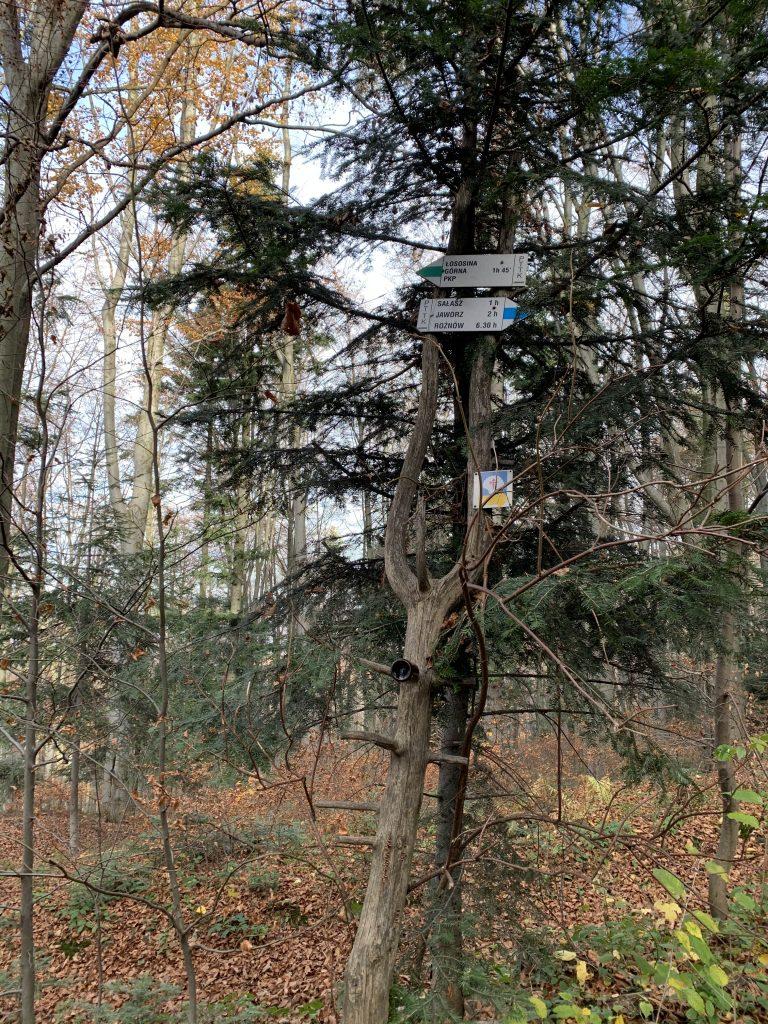 Wieża widokowa pod Jaworzem - Krzyżówka szlaków zielonego i niebieskiego powyżej Przełęczy pod Sałaszem