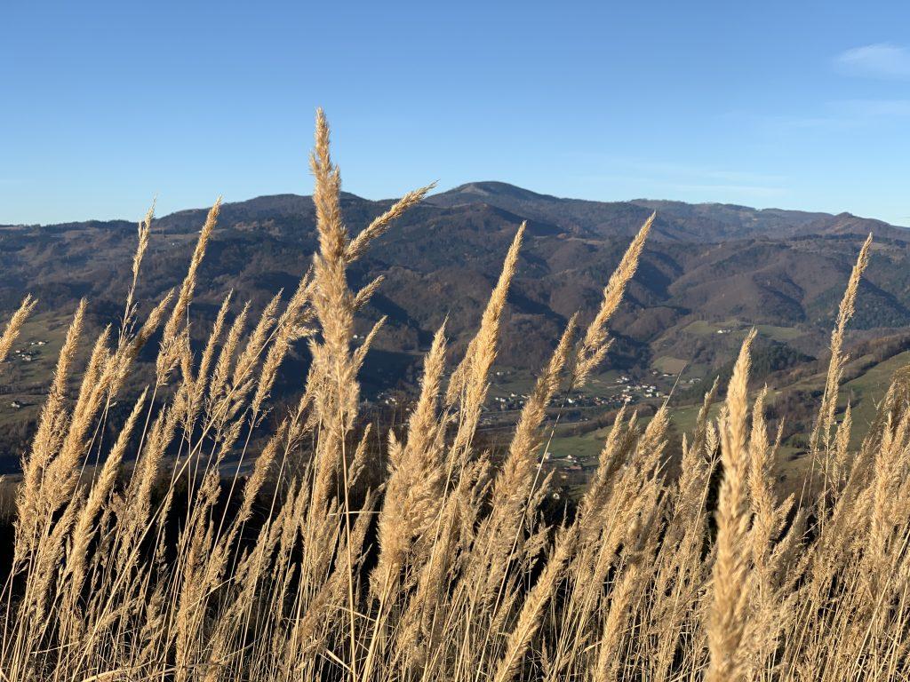 Cyrla - Najwyższy szczyt Beskidu Sądeckiego wśród traw