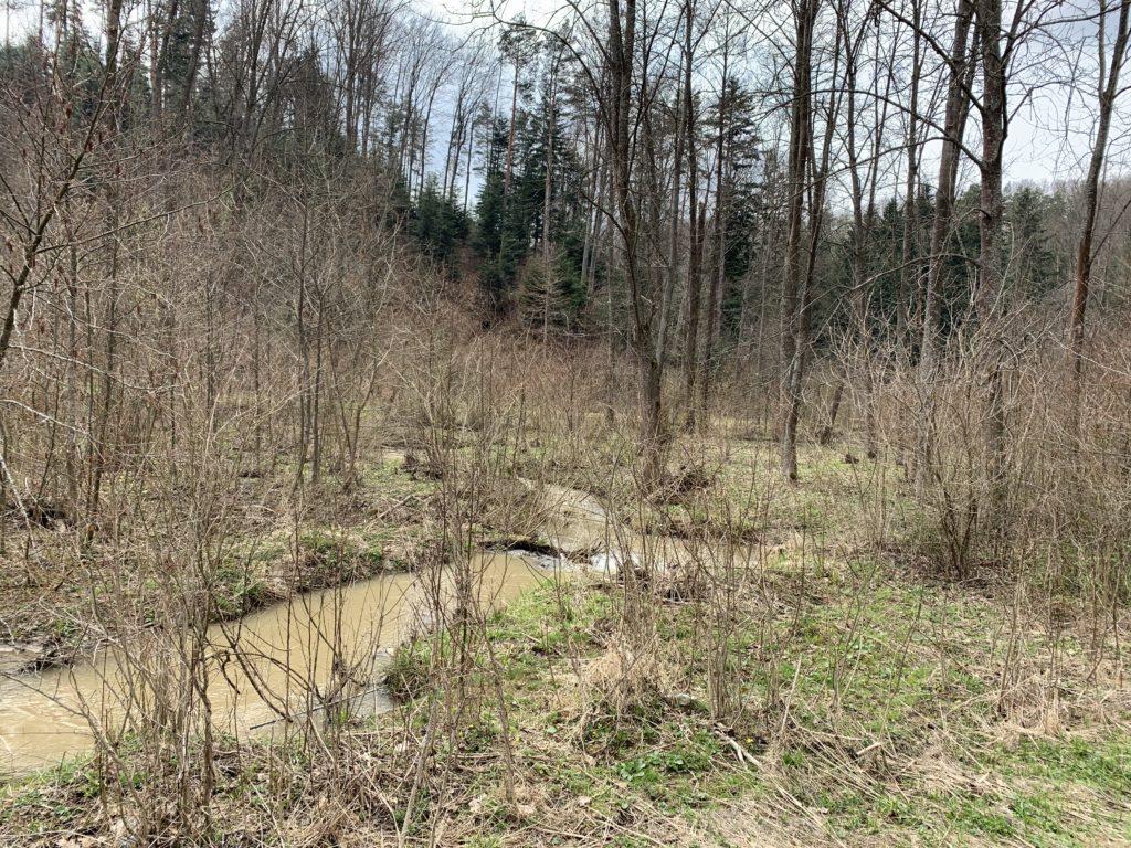 Kopaniny - Potok Kruszelnicki podczas roztopów