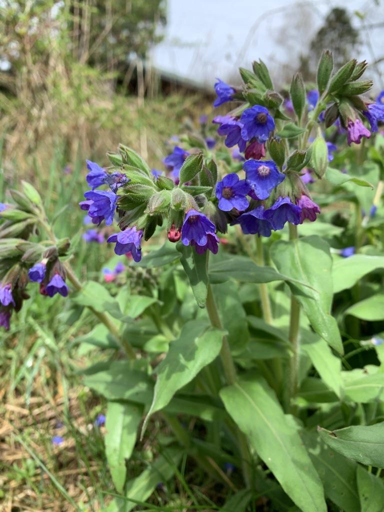 Ścieżka do Ralla - Ehh te zioła i kwiatuszki :)