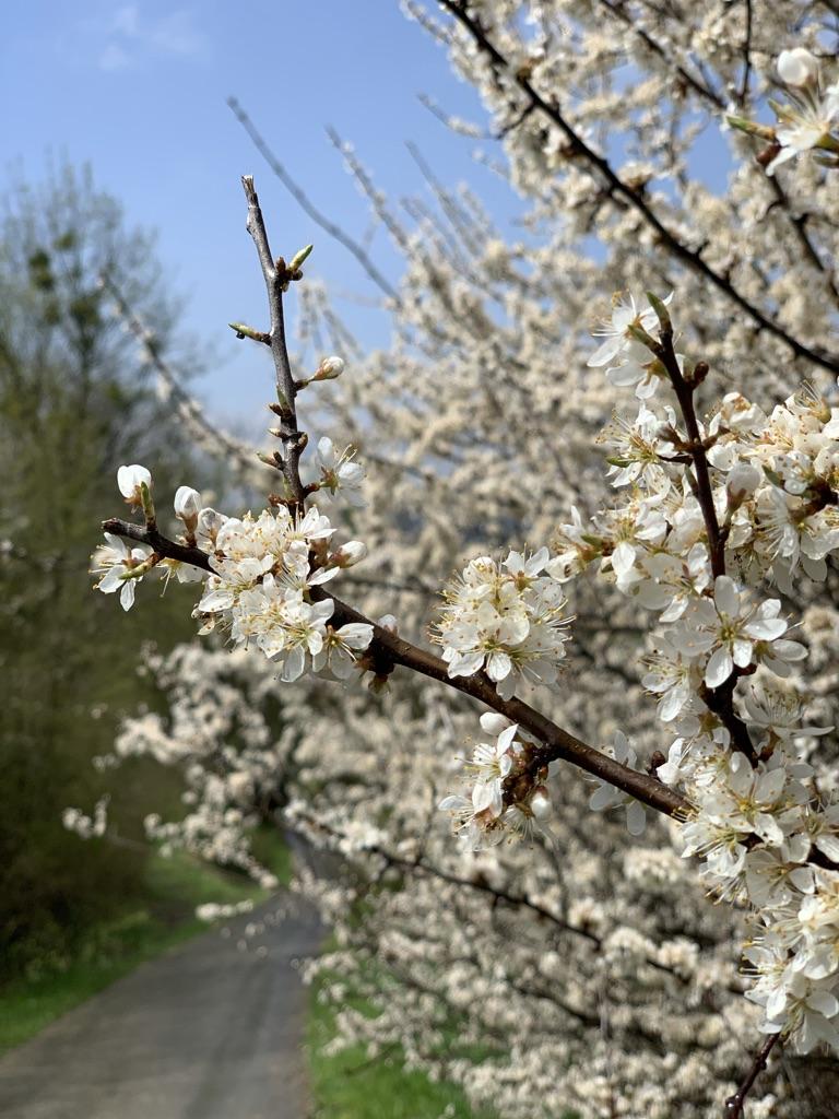 Ścieżka do Ralla - Początek wiosny