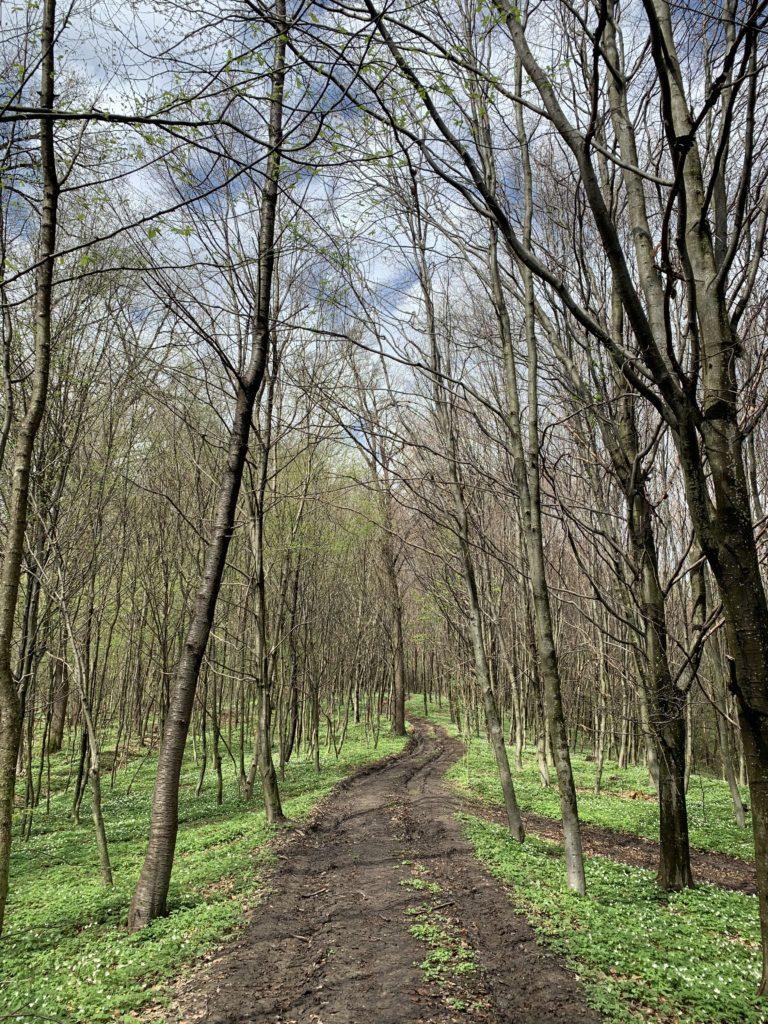 Ścieżka do Ralla - W drodze na Leoncinę